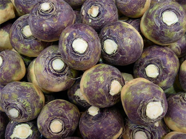 Брюква (Brassica napobrassica)